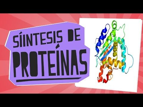 Síntesis De Proteínas Biología Educatina Youtube Proteinas