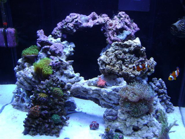 Possible aquascape for the new cube … (With images) | Reef ...