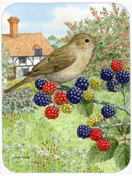 Les 25 meilleures id es de la cat gorie fauvette des jardins sur pinterest photos oiseaux des - Chant fauvette des jardins ...