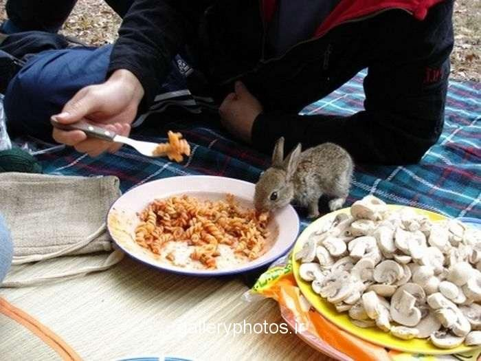 I don't remember pasta being on the approved lists of bunny foods. But I guess he's too young to read.