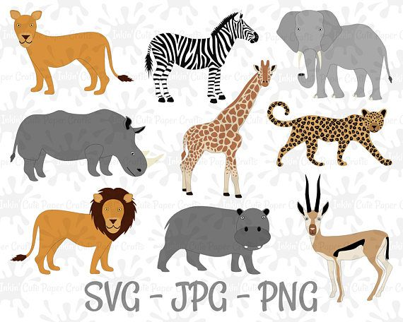 Line Art Jungle Animals : Safari animal clipart african animals lion svg
