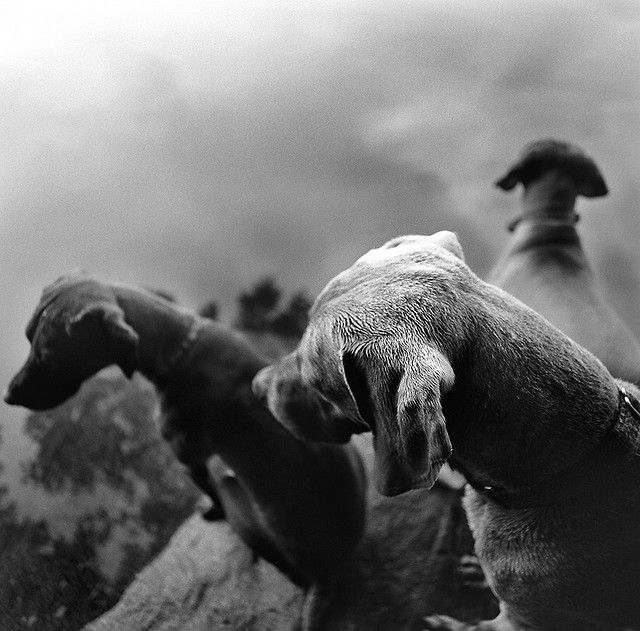 Three for Fish by Bgrax, via Flickr (Hasselblad, 60mm, Medium Format, Kodak Tri-X 400)