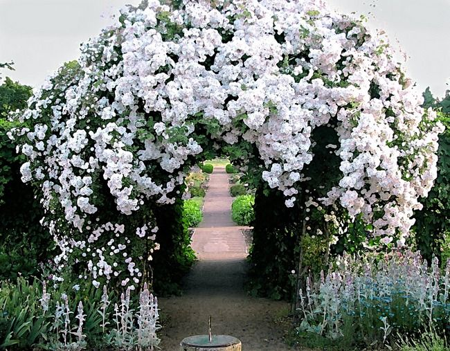 This Rose Arbor Graces The Path Through The Period Garden At Fort Vancouver National Historic Site In Vancouver Wa Beautiful Gardens Garden Arches Dream Garden