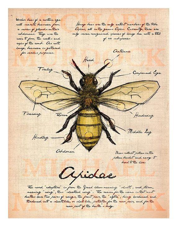 Ilustración de diario de campo de abeja 11 x 14 | Fondos | Pinterest ...