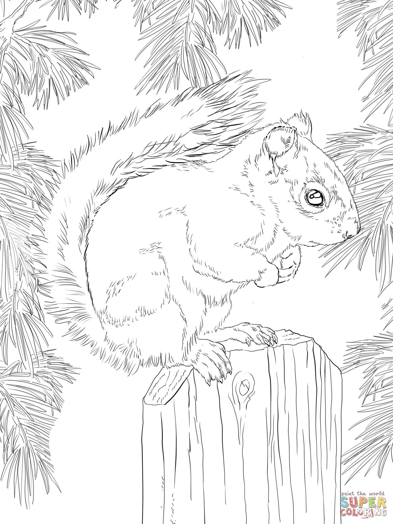 American Red Squirrel Super Coloring Squirrel Coloring Page Animal Coloring Pages Coloring Book Art [ 2048 x 1536 Pixel ]