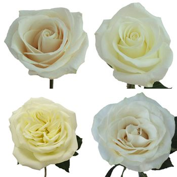 White Ecuadorian Roses Bris Wedding Flowers Flowers White
