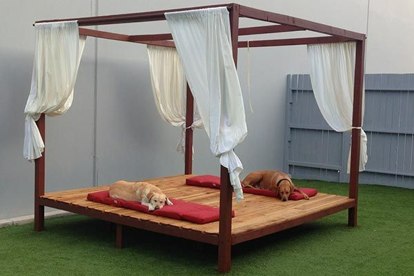 Luxe Pet Hotels Located In Las Vegas Is Determined To Win The Honor Of Being The Most Luxurious Pet Hotel In America Luxury Dog Kennels Pet Hotel Luxury Dog