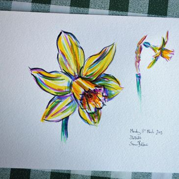 Posts About Daffodils On Drawing Upon Life Daffodil Tattoo Daffodil Flower Tattoos Watercolor Tattoo Flower
