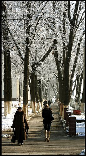 After the snow . Tashkent Uzbekistan