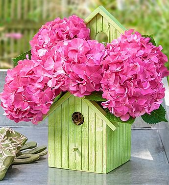 Spring Fresh Flowers Online Plant Gifts Bird House