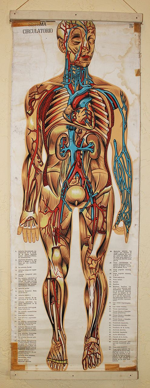 vintage medical chart | Biomedicina | Pinterest | Medicina ...