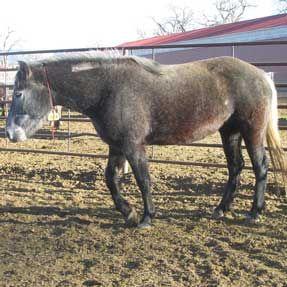 CCi - Wild Horse Inmate Program