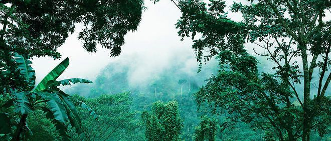 C'est au coeur de la forêt tropicale que se niche la mine de Muzo, le plus célèbre gisement d'émeraudes de Colombie.