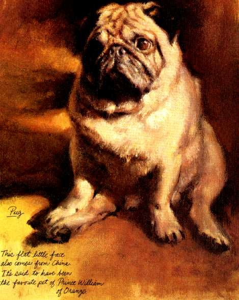 Love This Print And The Book It Comes From Dog Paintings Pugs