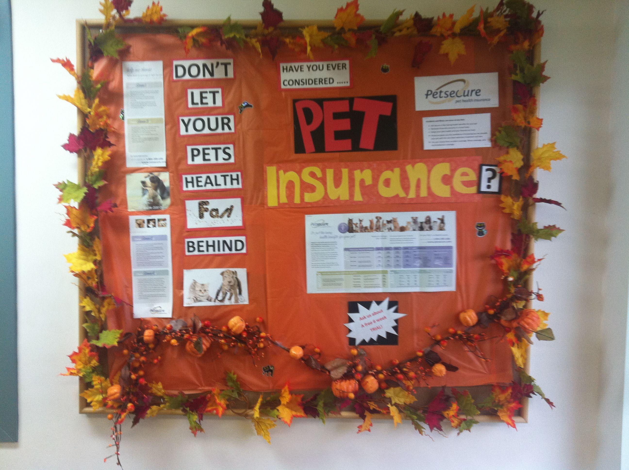 Main street veterinary hospital pet health veterinary