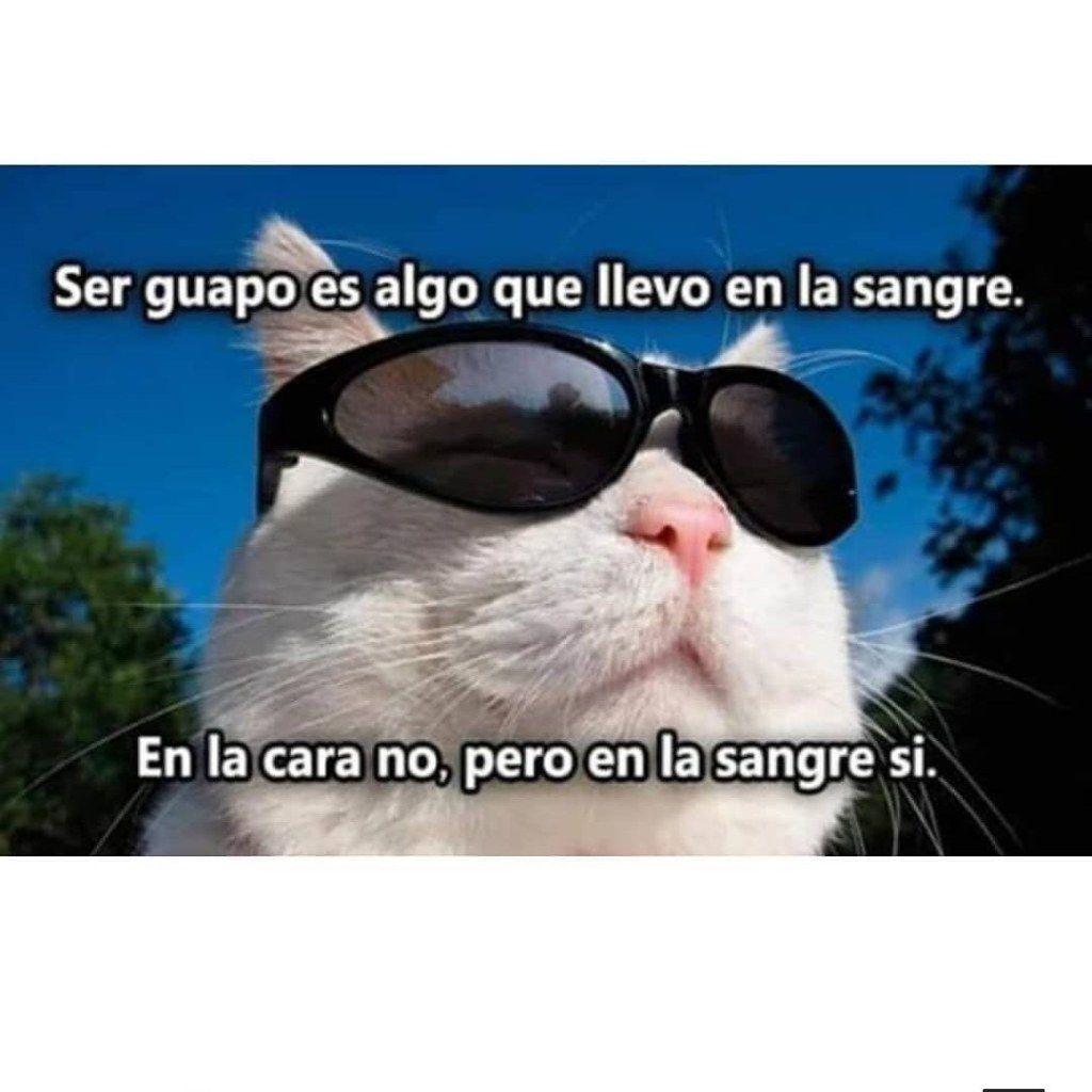 Memes Random De La Semana Lo Guapo Lo Llevo En La Sangre Memes Memesespanol Memesgraciosos Memesenespanol Memesquad Southameric Funny Memes Memes Humor
