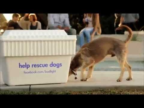 Super bowl xlvi in indianapolis rescue dog here we go bud light super bowl xlvi in indianapolis rescue dog here we go bud light commercial mozeypictures Choice Image