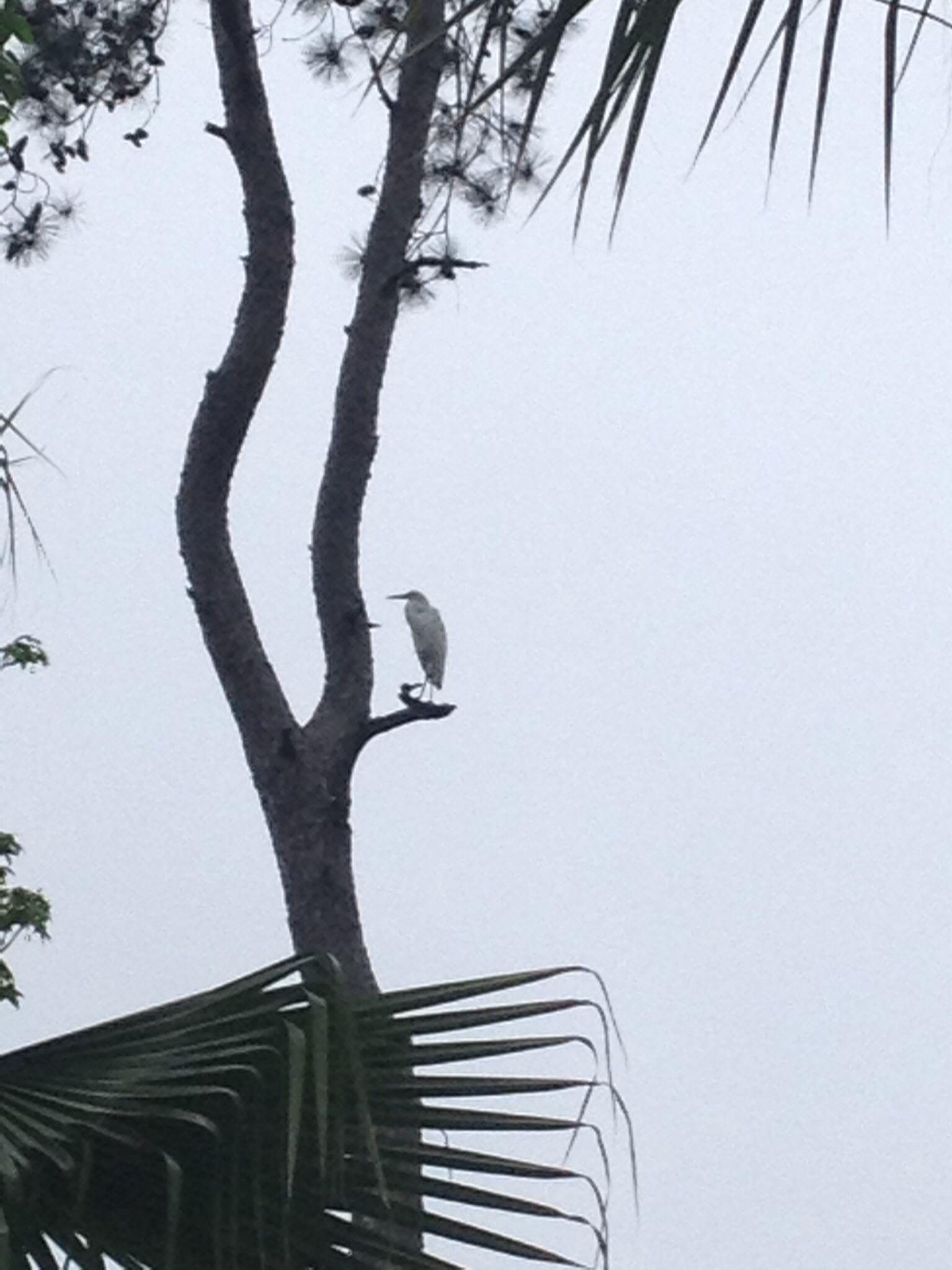 Heron perched on tree limb favorite places heron snapshots