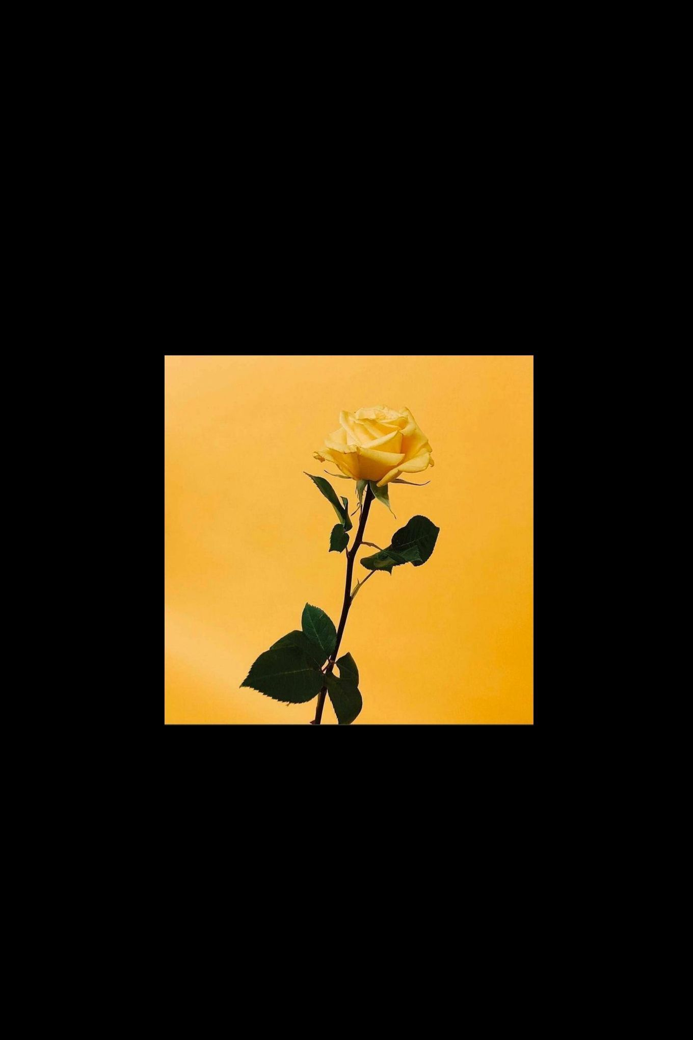 No Quote Yellow Black Rose Wallpaper Yellow Wallpaper Aesthetic In 2020 Iphone Wallpaper Yellow Black Aesthetic Wallpaper Aesthetic Wallpapers