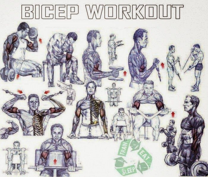 Best Bicep Workouts For Size | bodybuilding | Pinterest