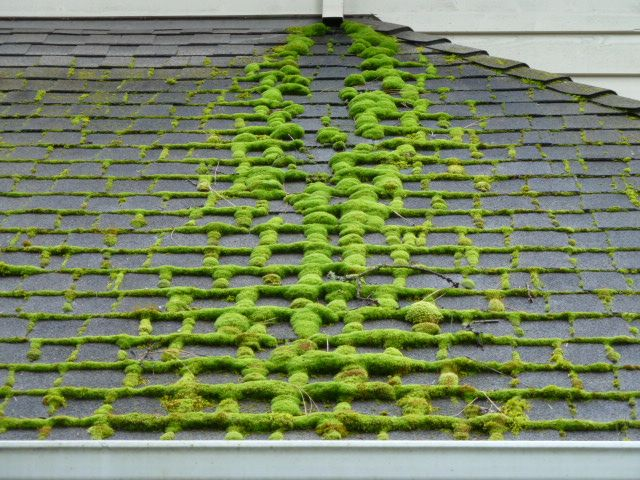 Roofs With Bright Green Moss On Them Are All Too Common Here In The Pacific Northwest Moss Thrives In Our Moist Climate At Roof Cleaning Moss Removal Roof