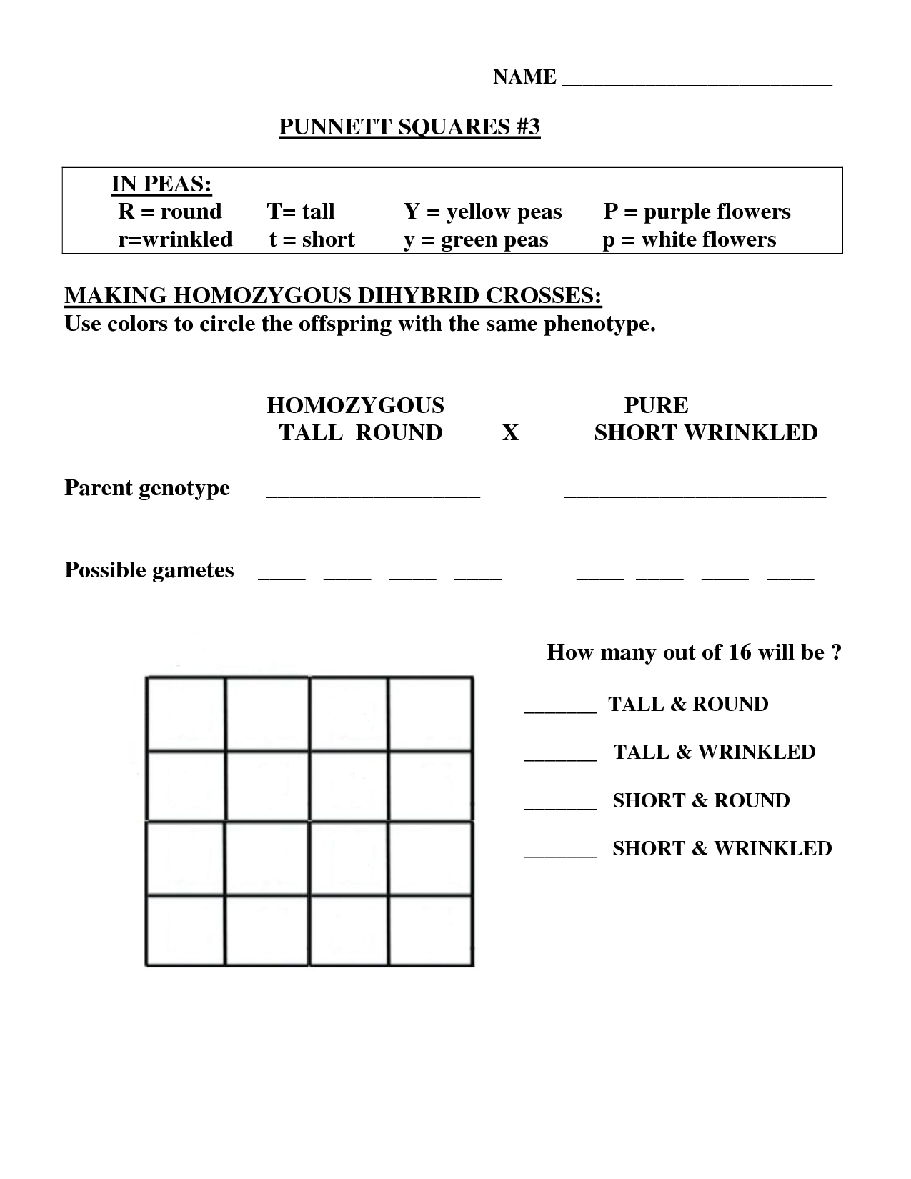 Dihybrid Cross Worksheet Answer Key In