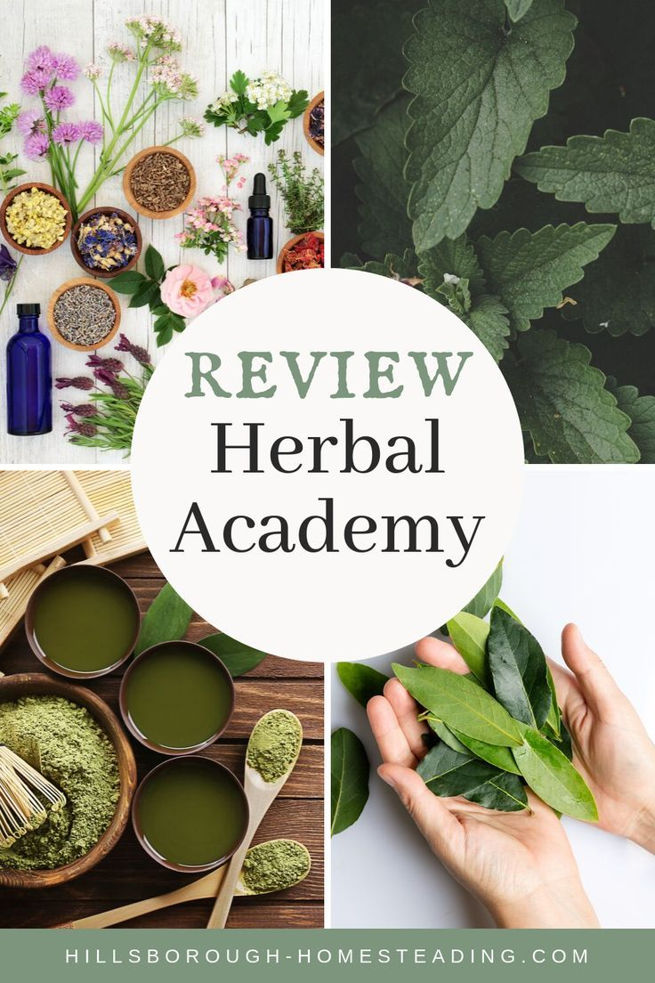 My Honest Review of Herbal Academy's Introductory