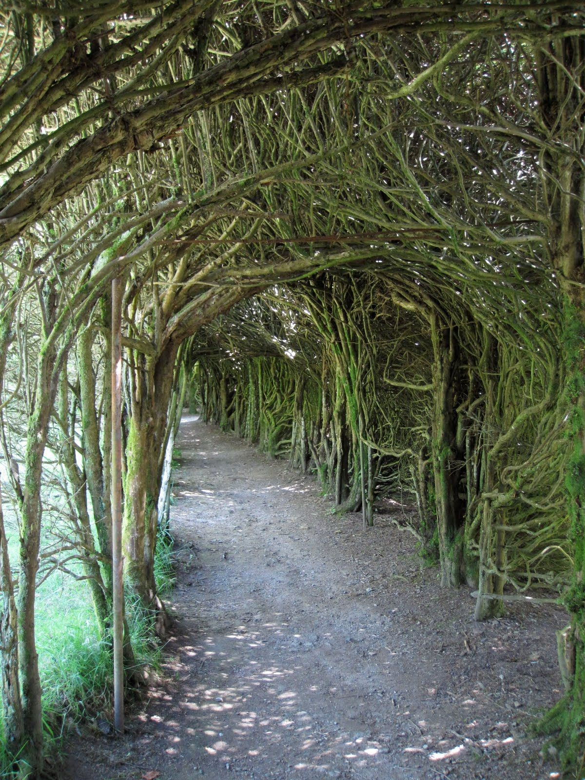 yew tunnel trevarno garden cornwall andy goldsworthy