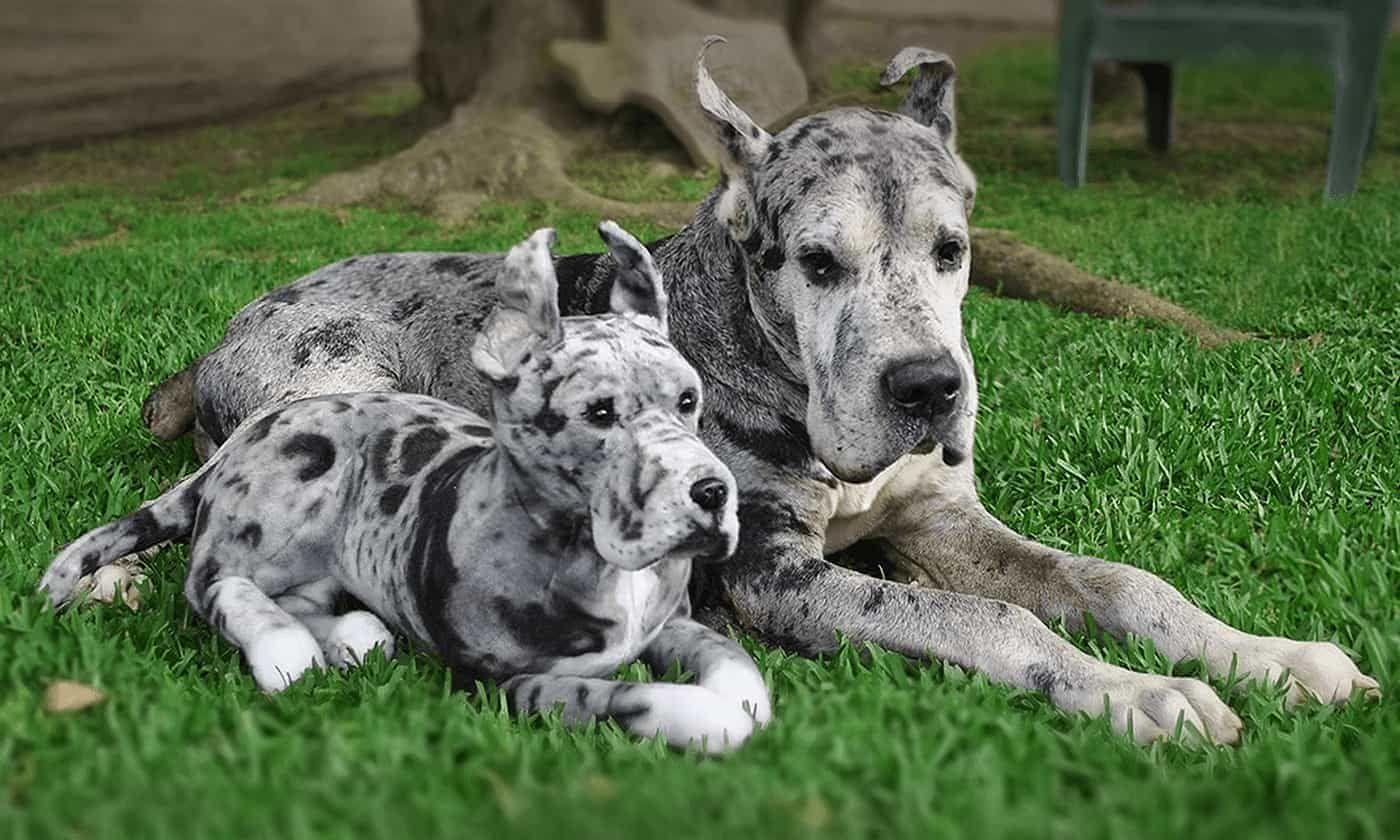 Custom Stuffed Animal Of Your Pet Plush Dogs Cats Pets Dog