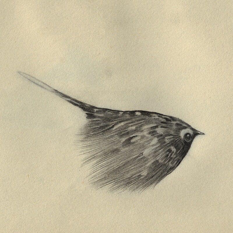 small eye smokebird. #art #bird #illustration #small #eyes #smoke #hello