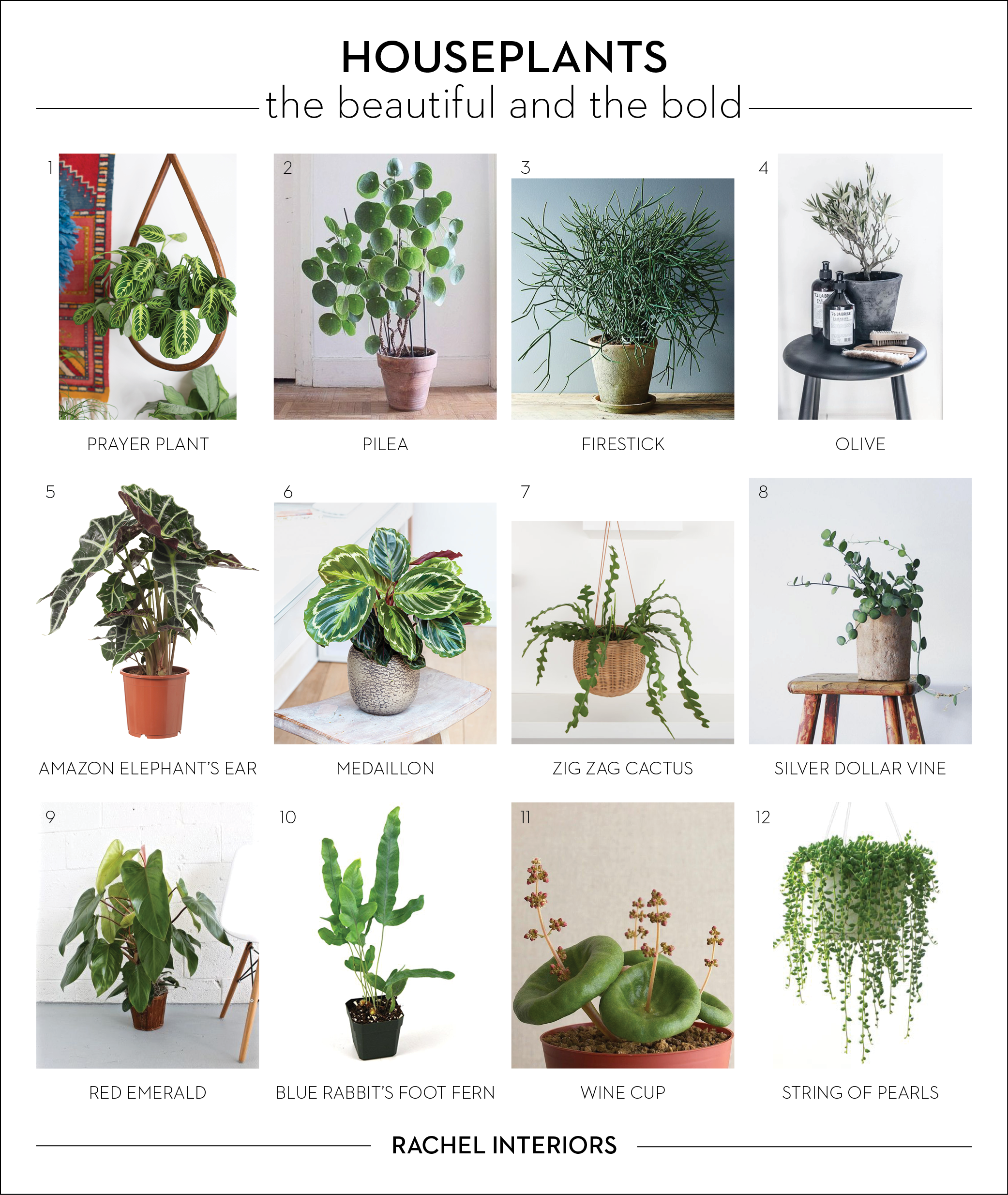 House Plants For Shady Rooms: You Can Never Have Enough Plants.