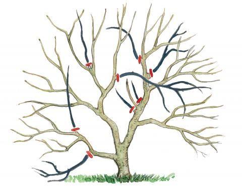 magnolien richtig schneiden gartenpflanzen pinterest zeichnungen g rten und pflanzen. Black Bedroom Furniture Sets. Home Design Ideas