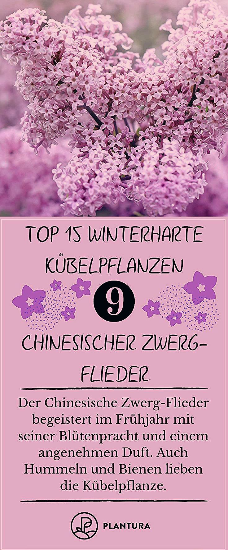 Photo of Winterharte Kübelpflanzen: Unsere Top 15 – Plantura