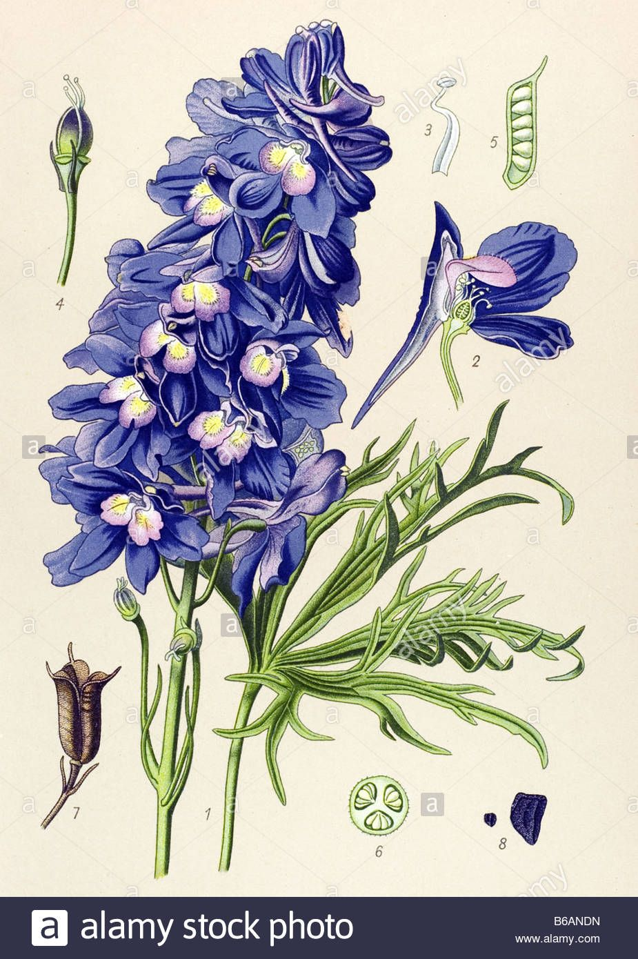 Larkspur Flower Tattoo