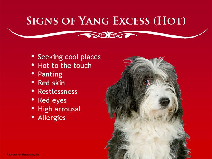 Cooling Foods Chinese Medicine Dogs