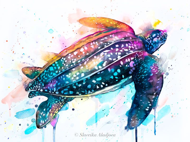 Leatherback Sea Turtle Watercolor Painting Print By Slaveika