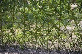 Bildergebnis Fur Weiden Zaun Flechten Espalier Garden Weaving