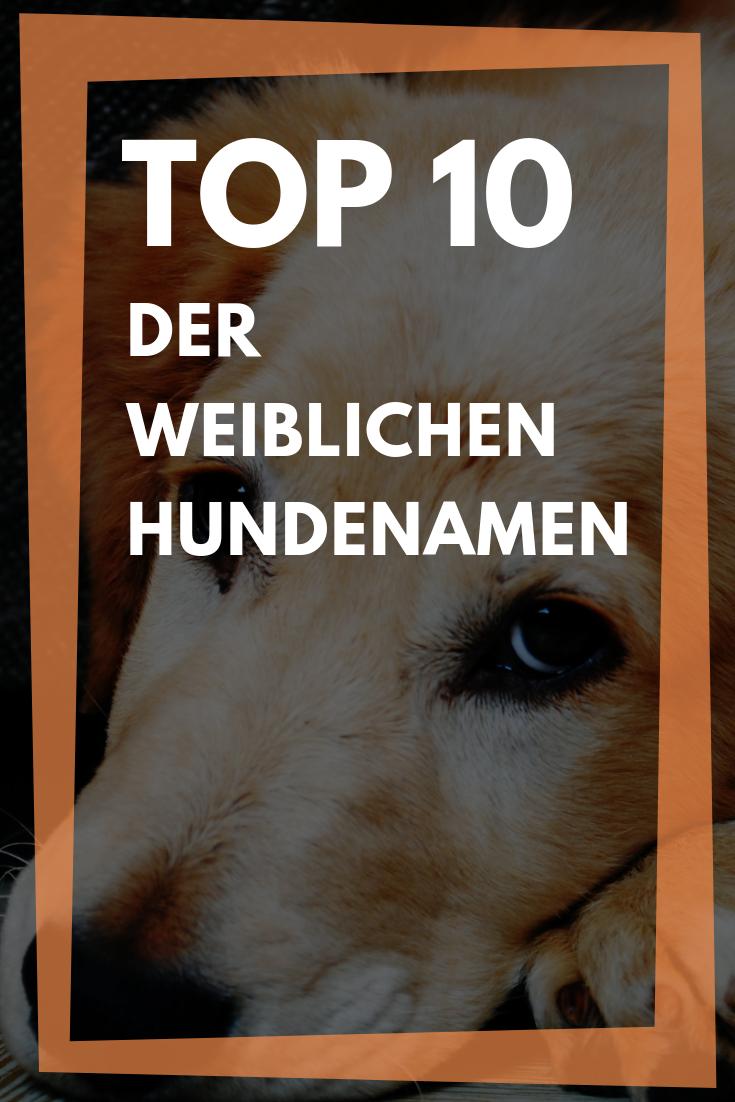Top 10 Der Beliebtesten Weiblichen Hundenamen Weibliche Hundenamen Hundenamen Und Namen Fur Hunde