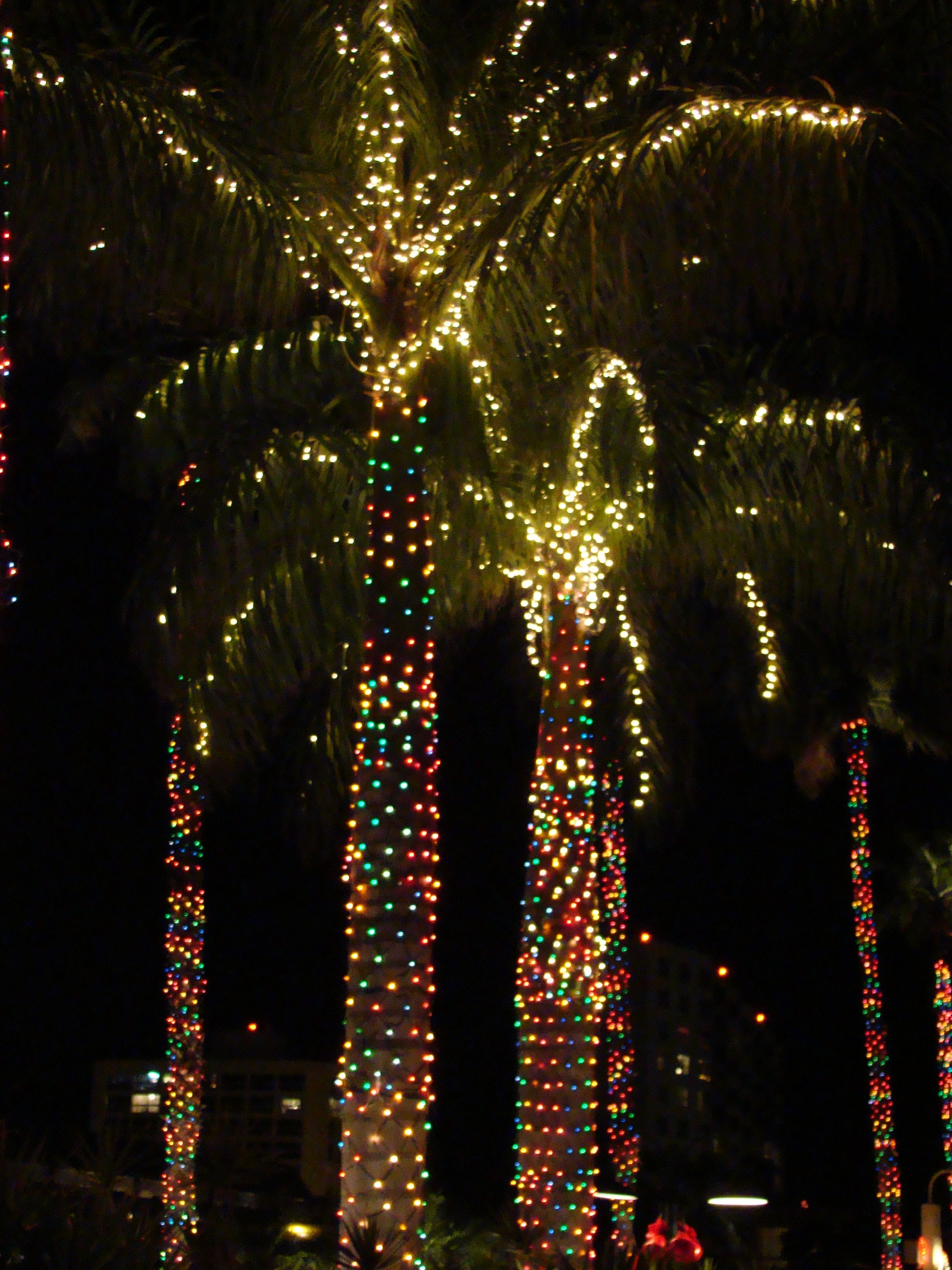 see even palm trees can look christmassy with pretty lights exteriorchristmaslights