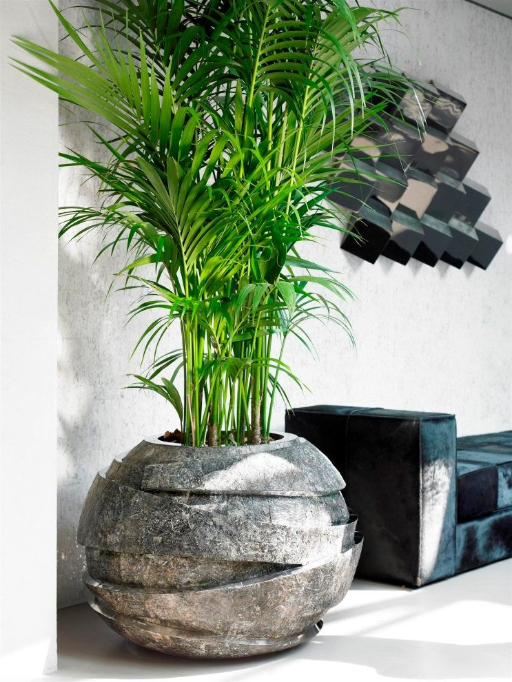 Pin By Zandro Tumaliuan On A Inspirations Plant Decor