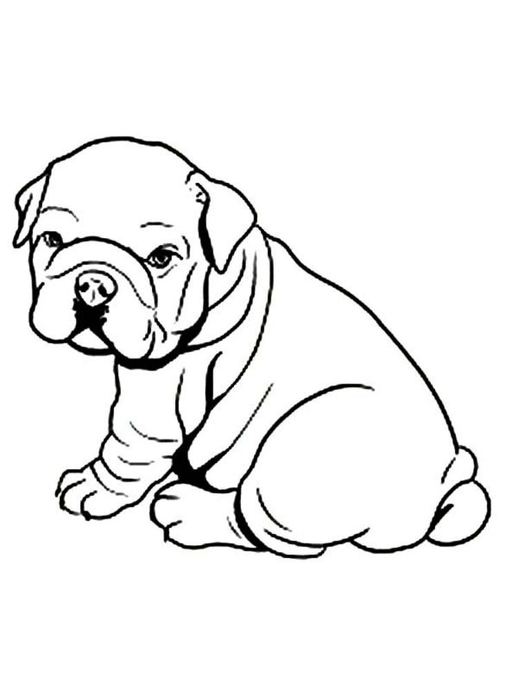 Bulldog Coloring Pages Bulldog Is A Pet Dog With Specific