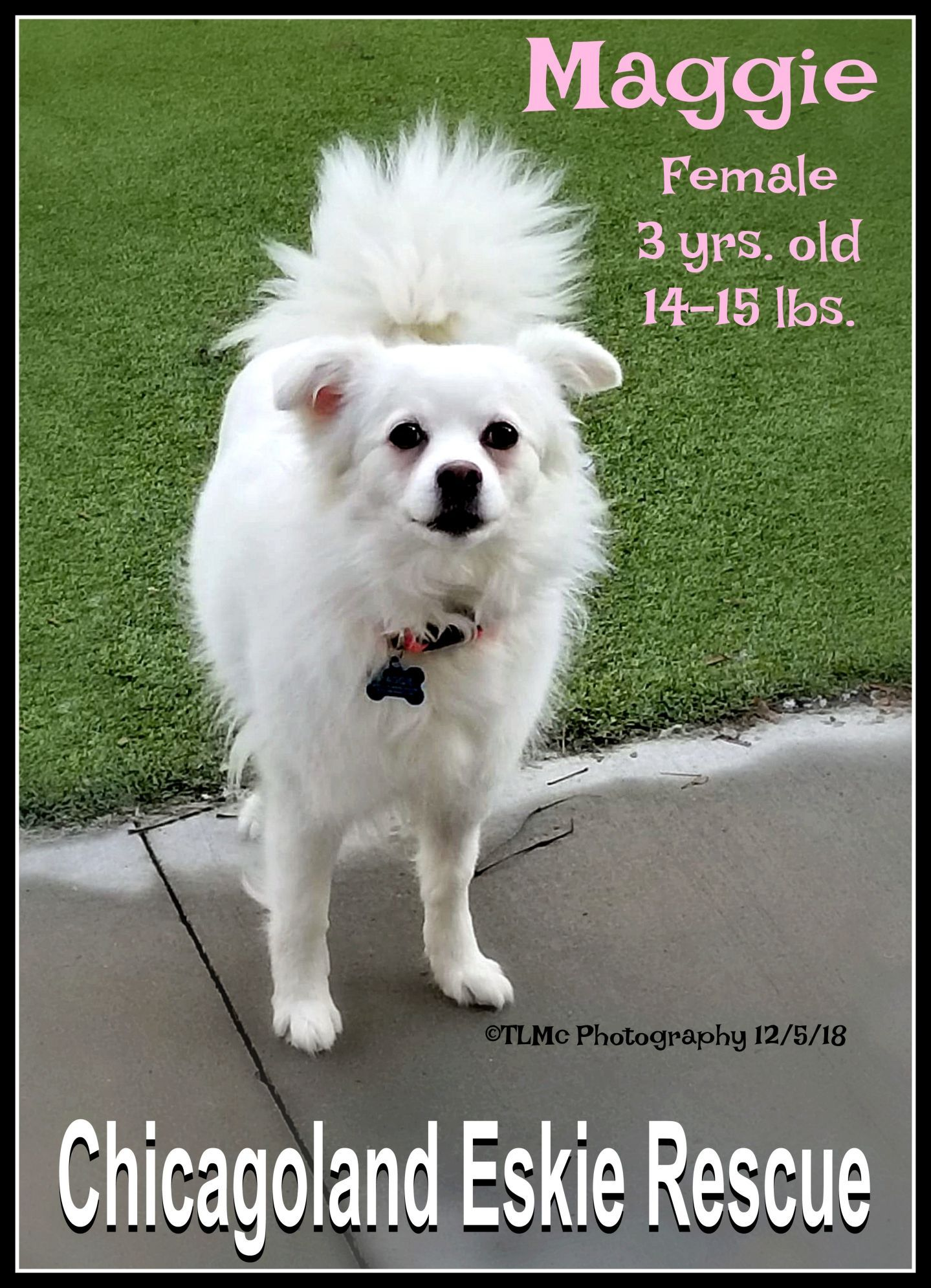 Adopt Maggie On Low Energy Dogs Dogs Maggie
