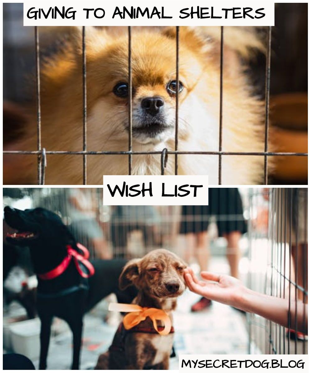 Wish List Items For Local Animal Shelters Animal Shelter Dog Rescue Shelters Dogs