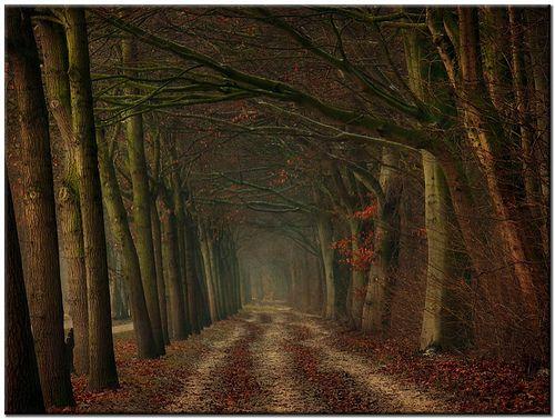 Oh my... I want to go here. Photo by  Lars van de Goor