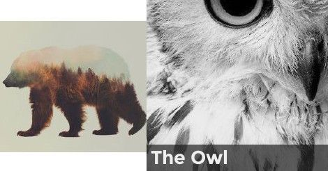 The Owl   What is your spirit animal?   Your spirit animal ...