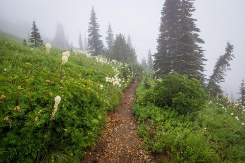 90377:   Hiking in a Foggy Wonderland by Jeff Moreau