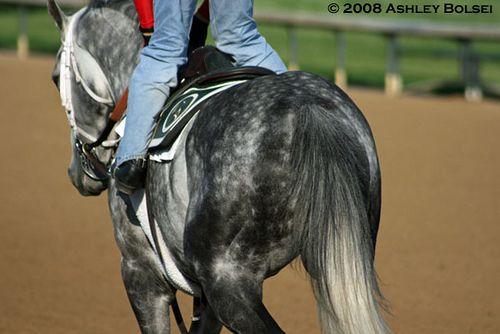 Grey thoroughbred racing