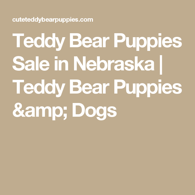 Teddy Bear Puppies Sale In Nebraska Teddy Bear Puppies
