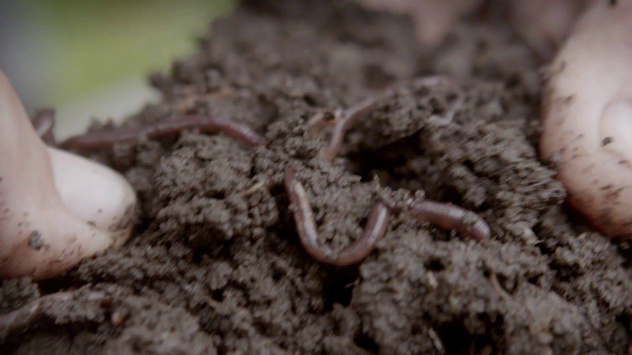 Agroecología: Naturaleza Viva