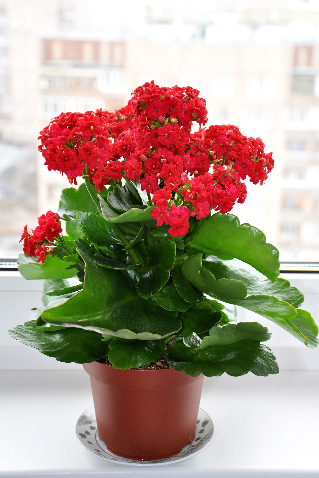 23 Of The Easiest Houseplants You Can Grow Indoor Flowering Plants Indoor Flowers Plants